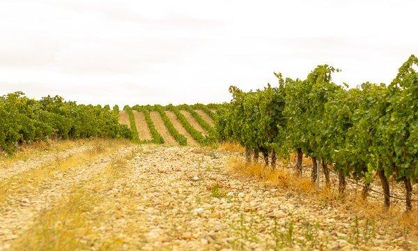 Bodega Naia vineyards - Terraselecta